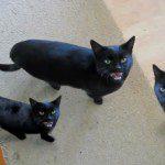 Cyriak - meow-mix
