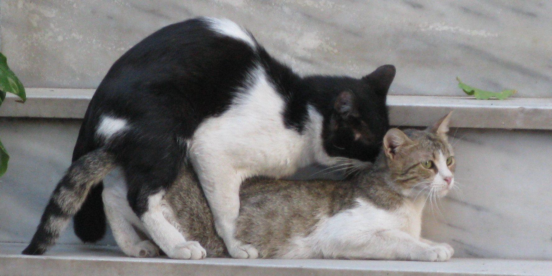 Krolse katten